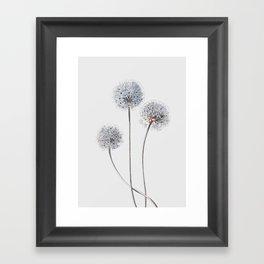 Dandelion 2 Framed Art Print