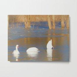 Swans see, hear & speak no evil Metal Print