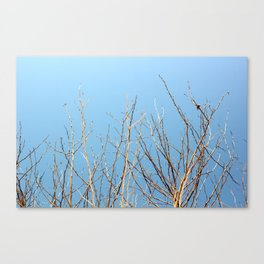 Winter Freeze Canvas Print