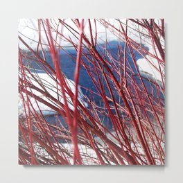 Winter still life Metal Print
