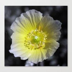 Yellow Poppy Canvas Print