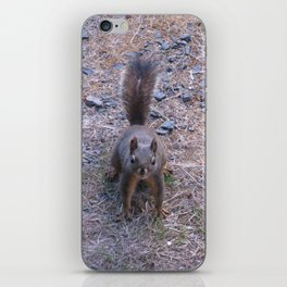 Douglas Squirrel  iPhone Skin