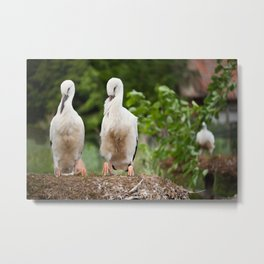 Orphaned two White Storks Metal Print