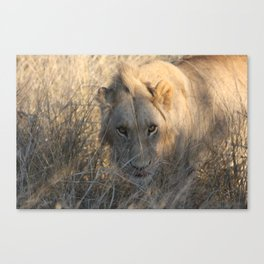 Hungry? Canvas Print