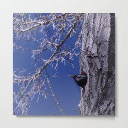 Blackbird - Baby Sitting - Jeronimo Rubio Photography 2016 (All Over) Metal Print