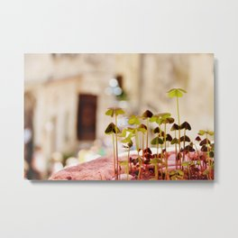 Clover forest Metal Print