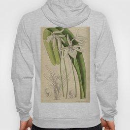 Angraecum gracilipes 144 8758 Hoody
