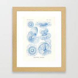 Vintage Leptomedusae (Jellyfish) Print by Ernst Haeckel, 1904 Educational Chart Framed Art Print