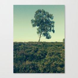 Lonely Tree, Hoge Veluwe National Park Canvas Print