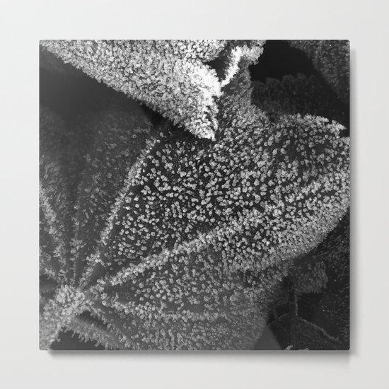 frosty time II Metal Print