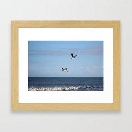 2 Seagulls Flying Framed Art Print