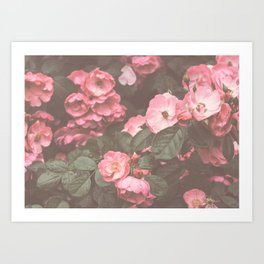 Pink Flowers in the Morning Art Print