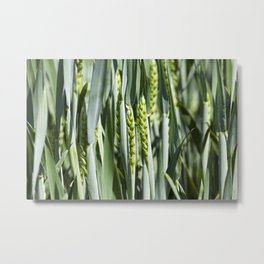 green field with cereal Metal Print