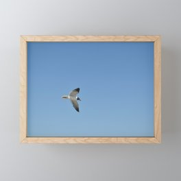 Seagull Soaring Framed Mini Art Print