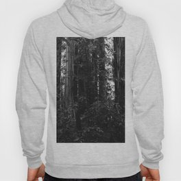 Redwood Forest VII Hoody