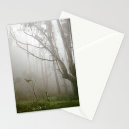 Spooky Tree in the Misty Foggy Forest - 35mm film Stationery Cards
