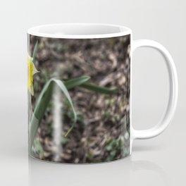 Spring Daffodil Coffee Mug