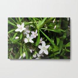 Spring Beauty 09 Metal Print