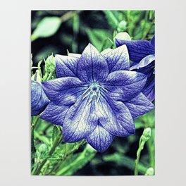 Purple Balloon Flower Floral Art A105 Poster