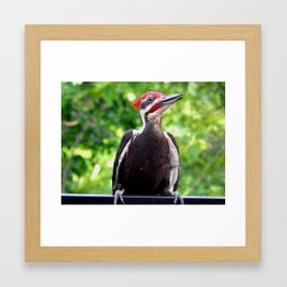 Surprise landing Framed Art Print
