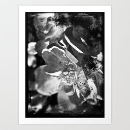 Knockout Roses No.1 Art Print