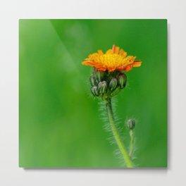 Orange summerflower Metal Print