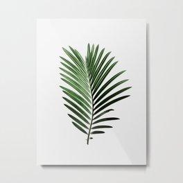 Plant, Leaf, Palm, Nature, Modern art, Art, Minimal, Wall art Metal Print