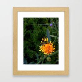 Meadow Katydid Nymph Framed Art Print