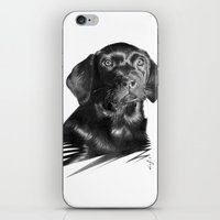 moss iPhone & iPod Skins featuring Moss by Jan Szymczuk