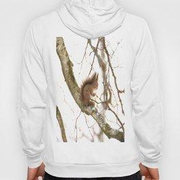 Little Squirrel On The Branch - Autumn Scene #decor #society6 #buyart Hoody
