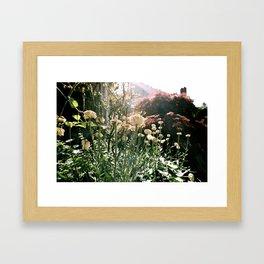 Flower Power II Framed Art Print