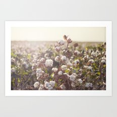 Cottonfield Art Print