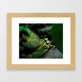 Leucomelas Poison Dart Frog Framed Art Print
