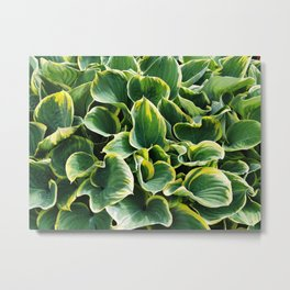 Leafy Green with Envy Metal Print