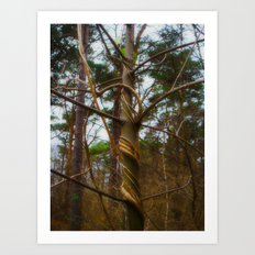 Tree Spiral Art Print