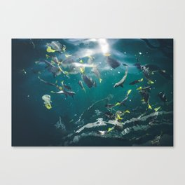 Getting Fishy in Cabo San Lucas Canvas Print