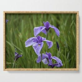 Sankeien Garden Iris Serving Tray