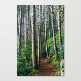 Trees: III // Oregon Canvas Print