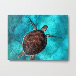 Sea Life Turtle Metal Print