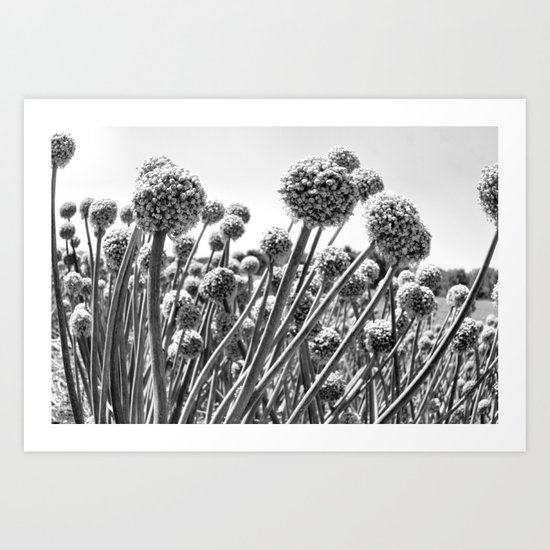 Garlic Fields Forever Art Print