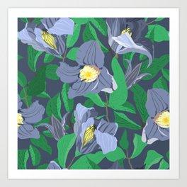 blue clematis Art Print