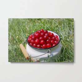 Prunus cerasus sour cherry fruits Metal Print