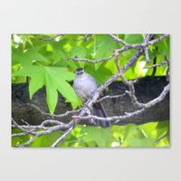 gray Canvas Prints featuring Gray by Lindsey Hart Photography
