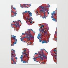 Ocean Theme- Red Blue Betta Fish Poster