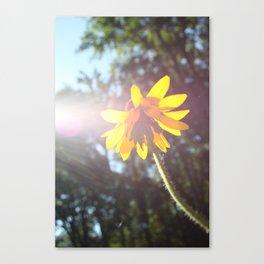 Feel the Sun Canvas Print