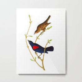 Prairie Starling Bird Metal Print