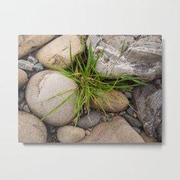 Grass In The Rocks Metal Print