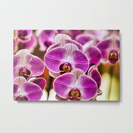 Multiple Purple & White Orchids Closeup Metal Print