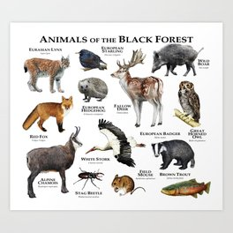 Animals of the Black Forest Art Print