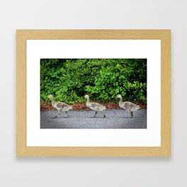 Three Goslings Framed Art Print